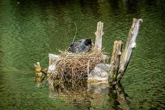 Auf dem Nest