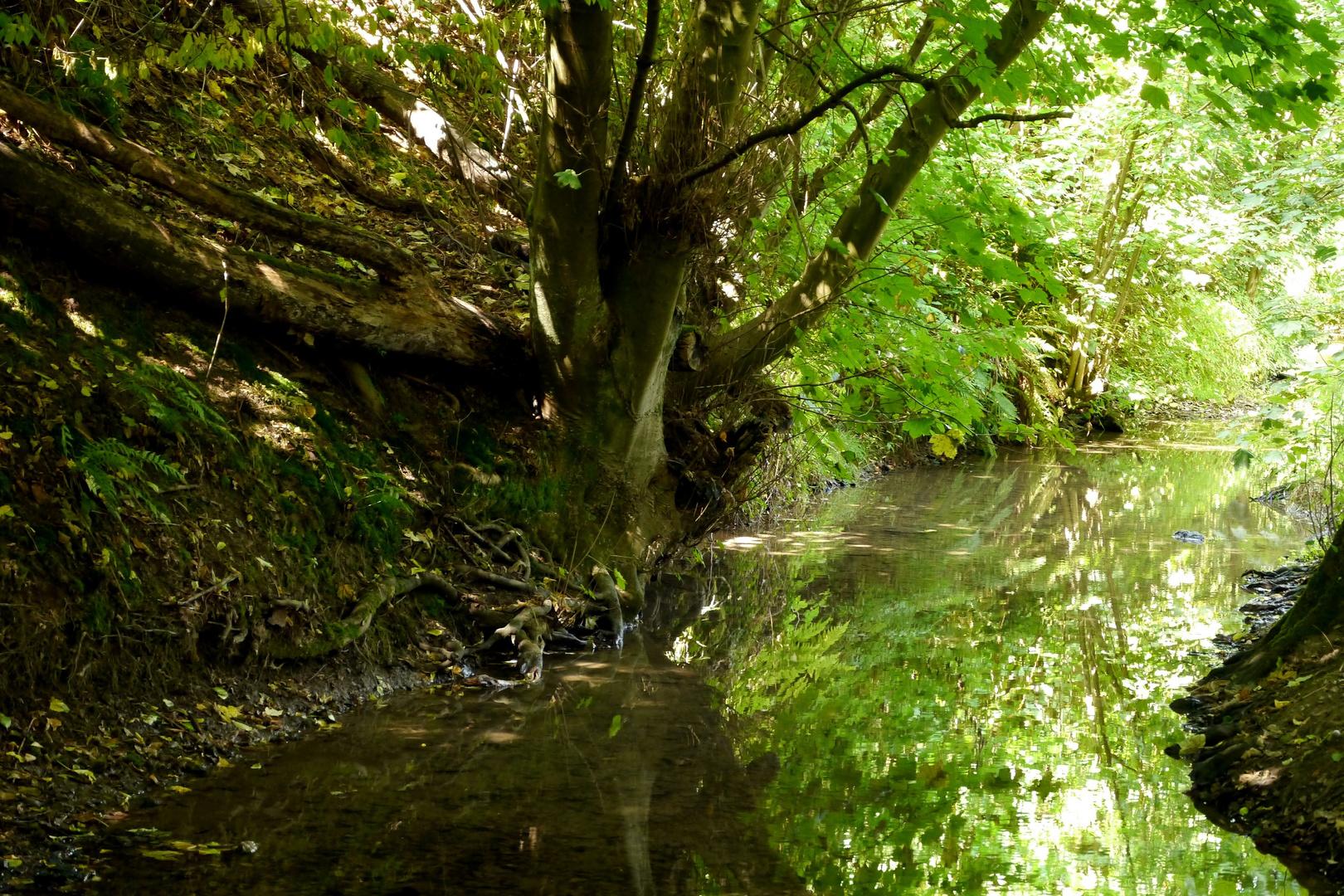 Auf dem Rundweg der Aprather Mühle an der Düssel gesehen: