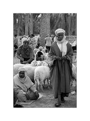 Auf dem Viehmarkt in Douz