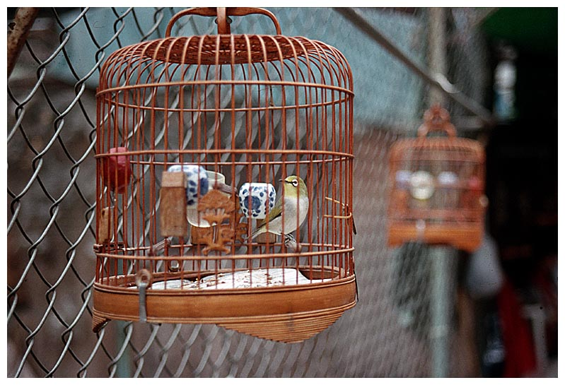 Auf dem Vogelmarkt in Mon Kok (1)