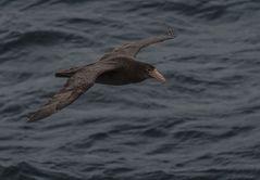 Auf dem Weg in die Antarktis     .DSC_7582-2