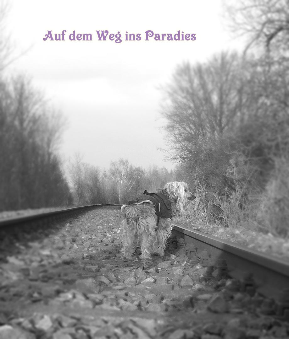 Auf Dem Weg Ins Paradies