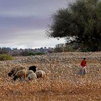 auf dem Weg von Marrakech nach Essaouira