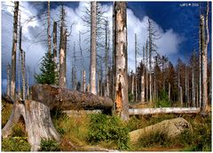 Auf dem Weg zum neuen Urwald im Nationalpark Harz