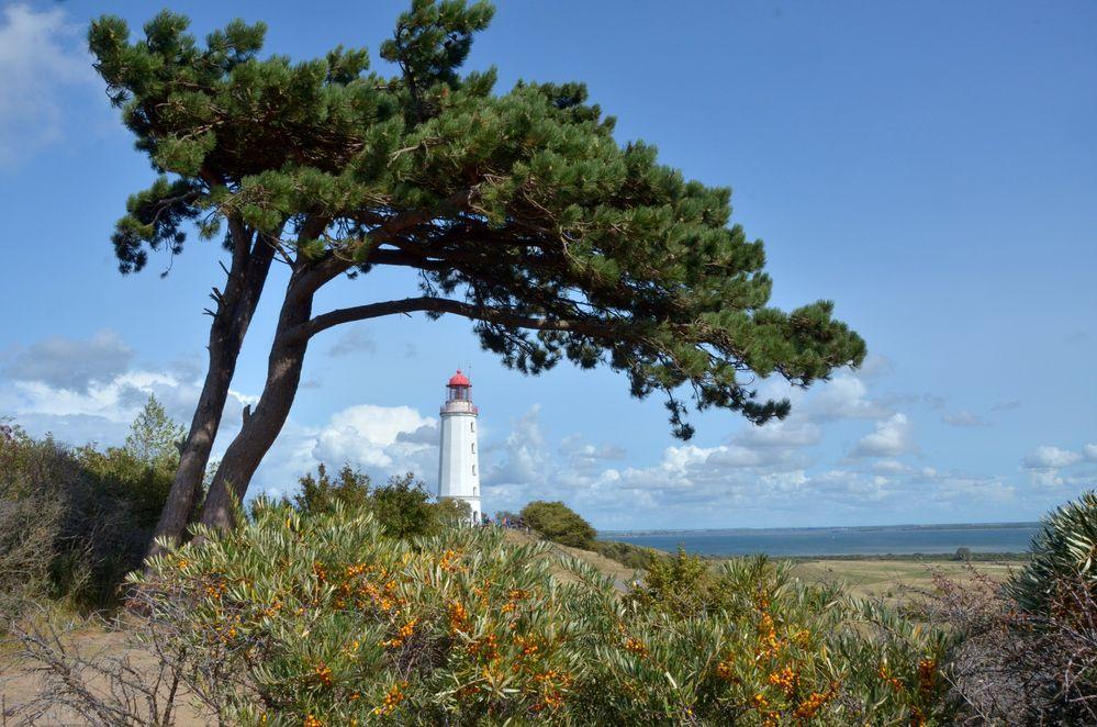 Auf dem Weg zum Sanddorn am Leuchtturm