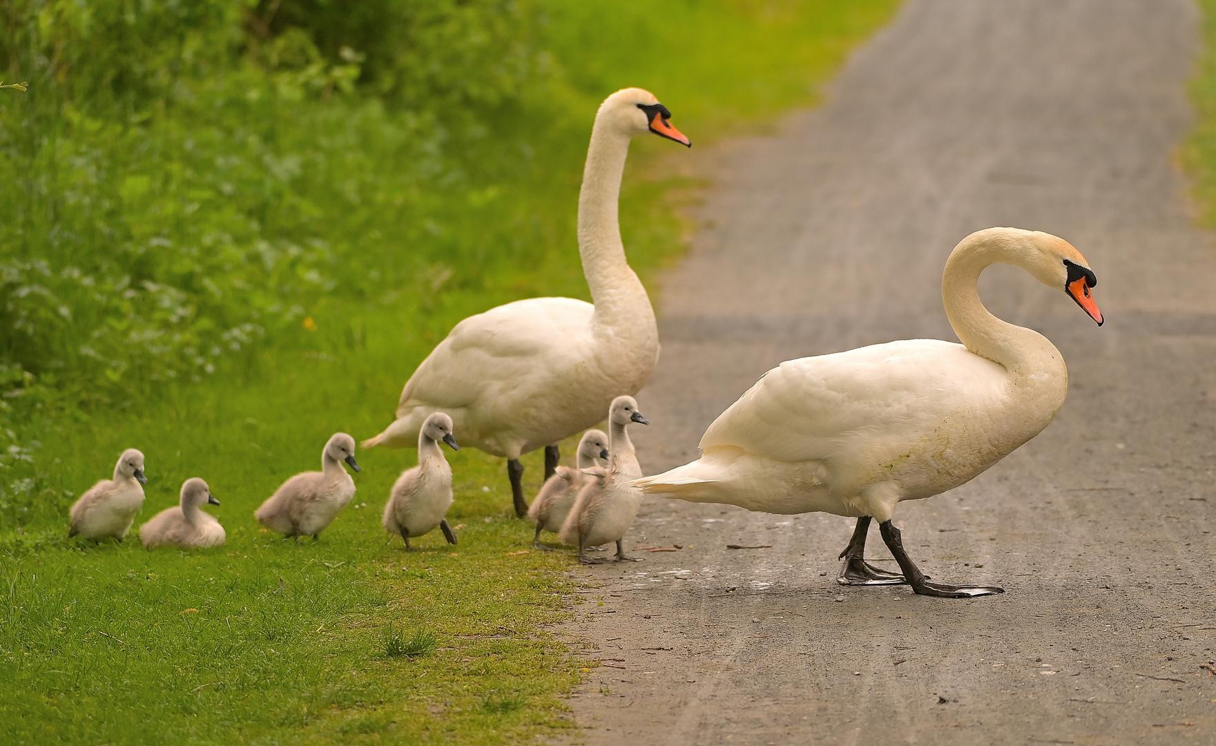 --auf dem Weg zum Teich!