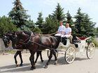 Auf dem Weg zur Hochzeit