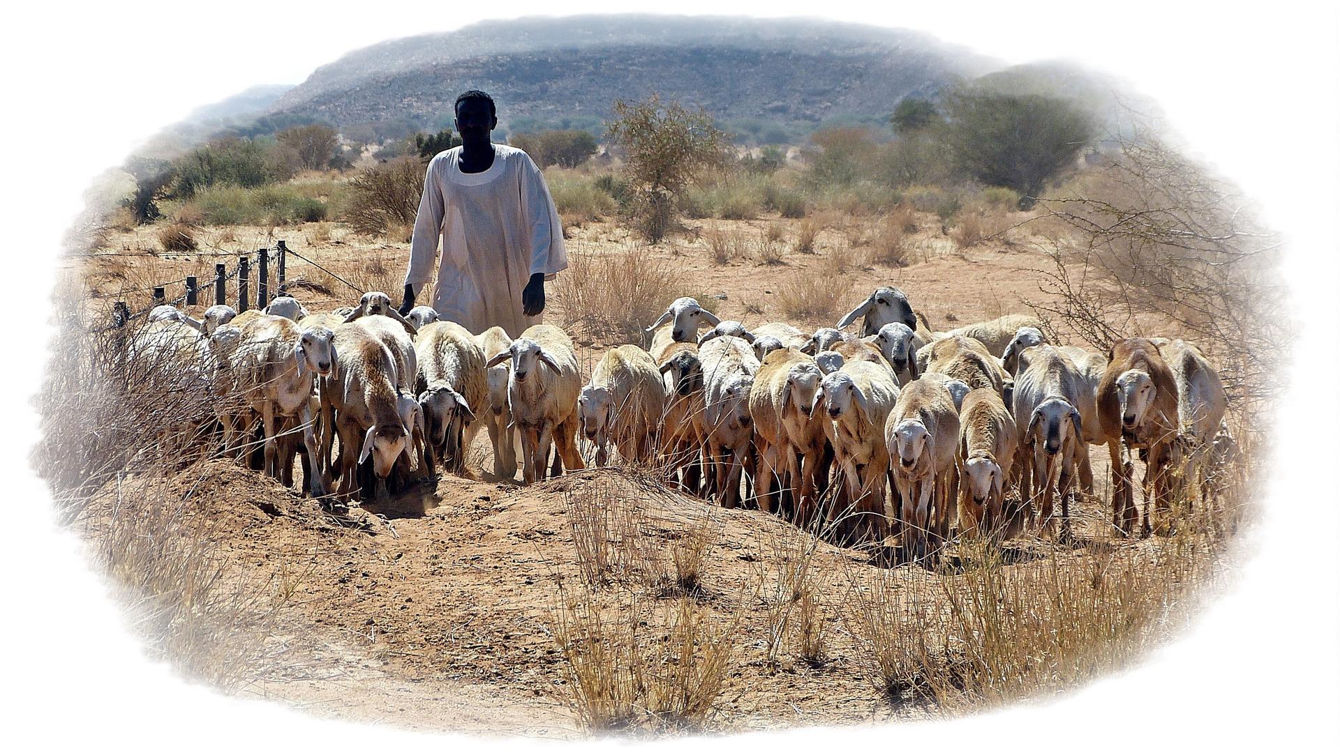 Auf dem Weg zur Tränke............. Foto & Bild   africa, eastern ...
