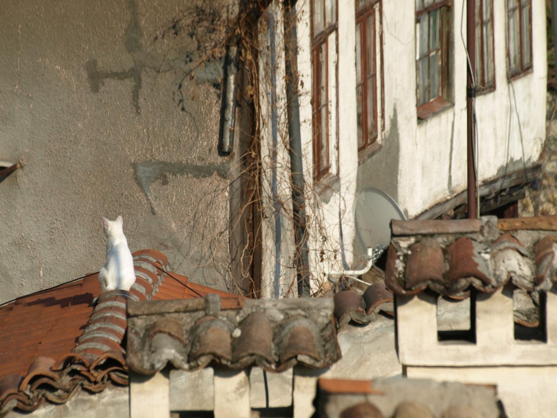 Auf den Dächern von Veliko Tarnovo