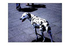 Auf den Hund gekommen #3