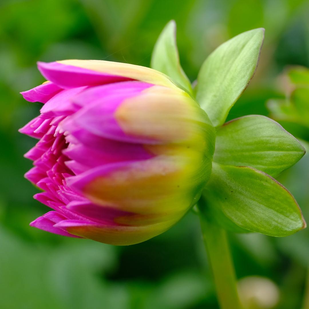 Auf Den Letzten Drücker Foto Bild Natur Pflanzen Bilder Auf