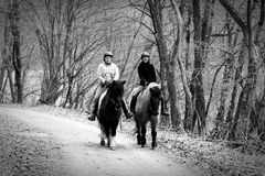 Auf den Rücken der Pferde liegt das Glück dieser Erde