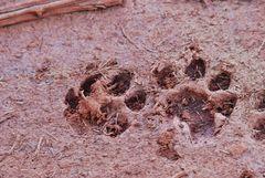 Auf den Spuren der Löwen