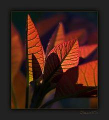 Auf den Spuren des Herbstes...