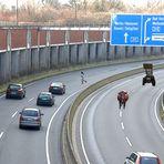 """---auf der Autobahn sind """"Rindviecher"""" keine Seltenheit----"""
