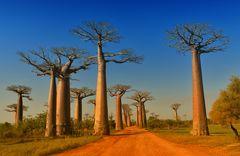 Auf der Baobab Allee