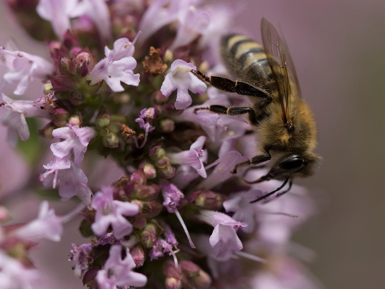 Auf der Bienenweide...
