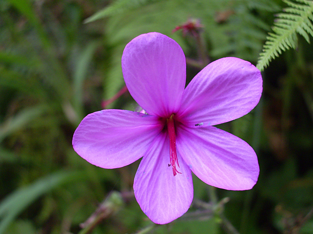 Auf der Blumeninsel Madeira
