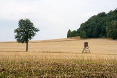 Auf der Ebenheit am Lilienstein