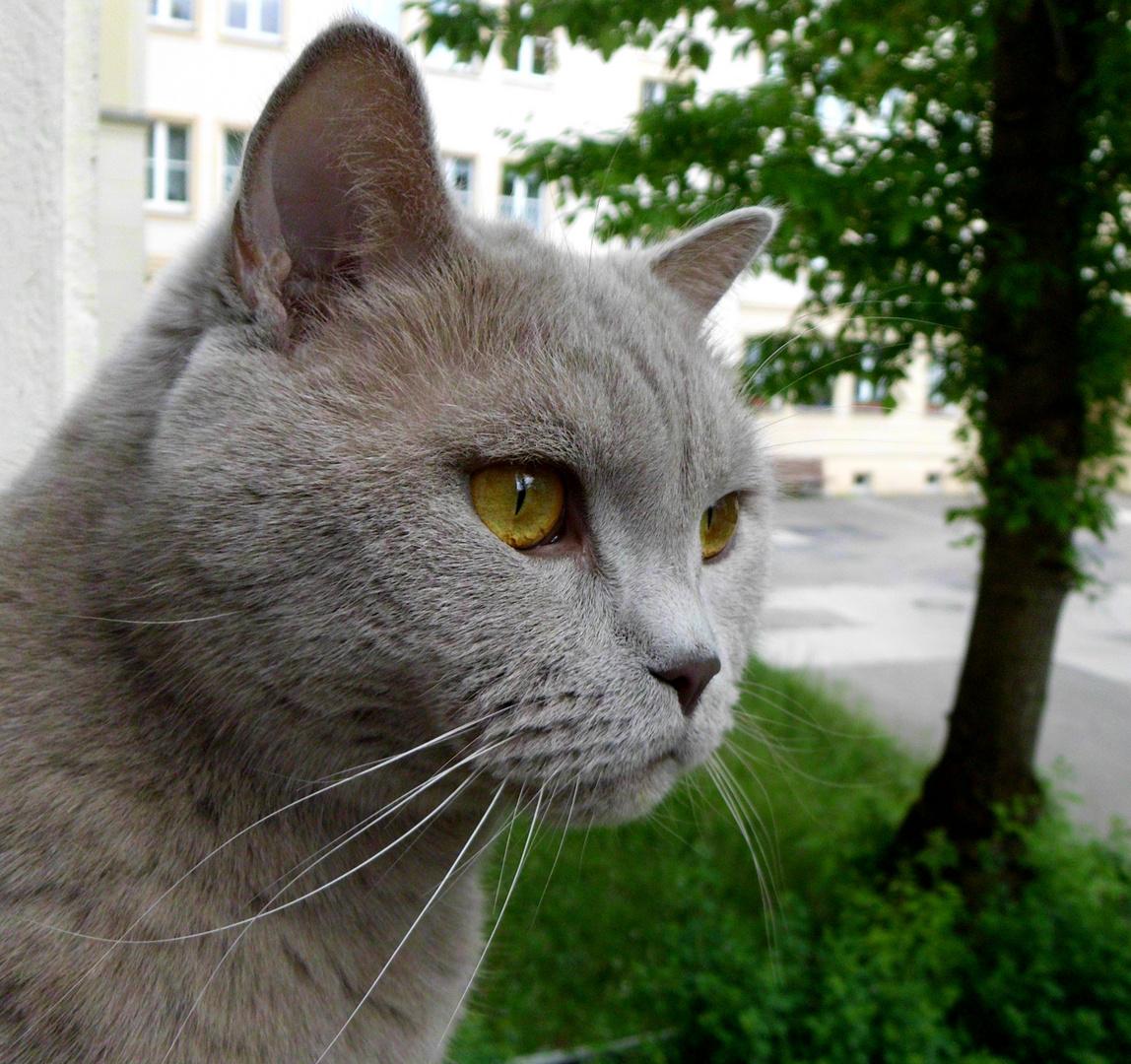 >^^< ...auf der Fensterbank...