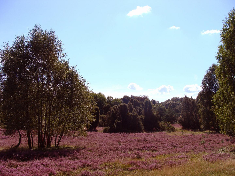 Auf-der-Heide-