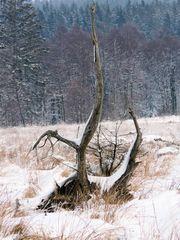 auf der Heide im Winter....