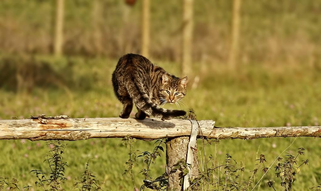 Auf der Jagd (3)