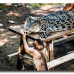 Auf der Krokodilfarm - Sumatra