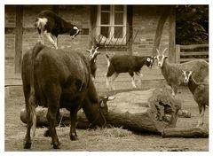 Auf der Kuh