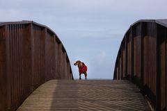 auf der Lügenbrücke