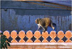 Auf der Mall von Jaipur