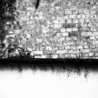 ....auf der Mauer, auf der Lauer...