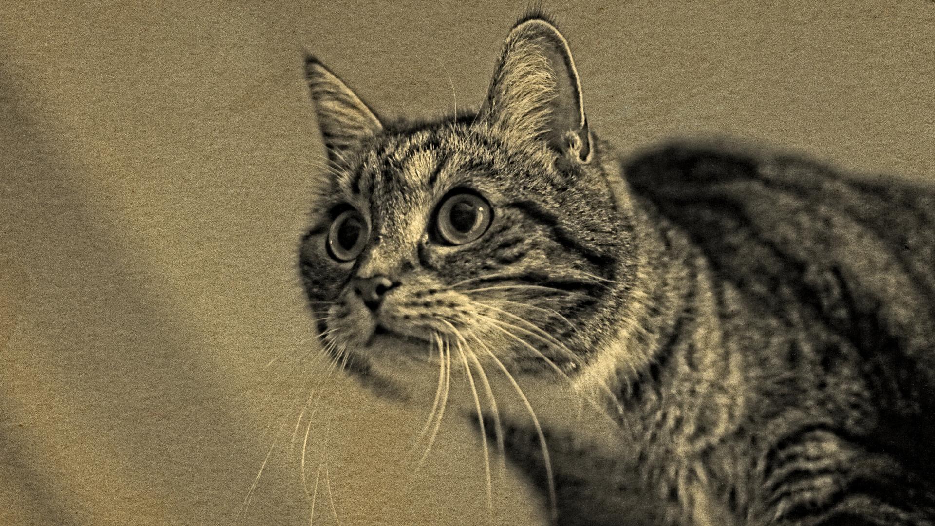 Auf der Mauer... Auf der Lauer... sitzt ´ne lieb Katze