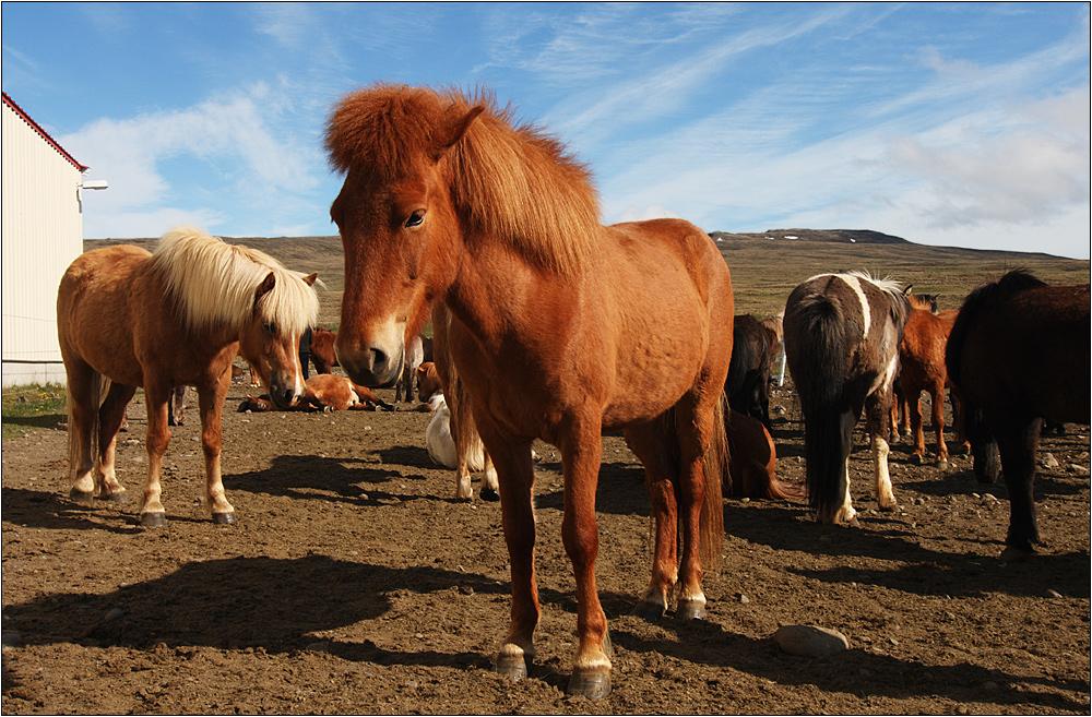 auf der pferdefarm