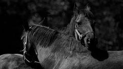 auf der Pferdewiese