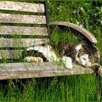 auf der Sonnenbank macht sich Merlin lang