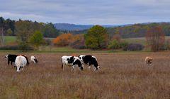 auf der Weide (en el pasto)