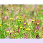 Auf der Wildblumen-Wiese