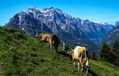 Auf die Alp