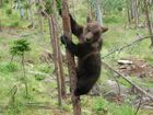 auf die Bäume ihr Affen der Wald wird gefegt