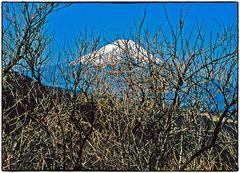 Auf Distanz zu den Göttern des Mount Fuji