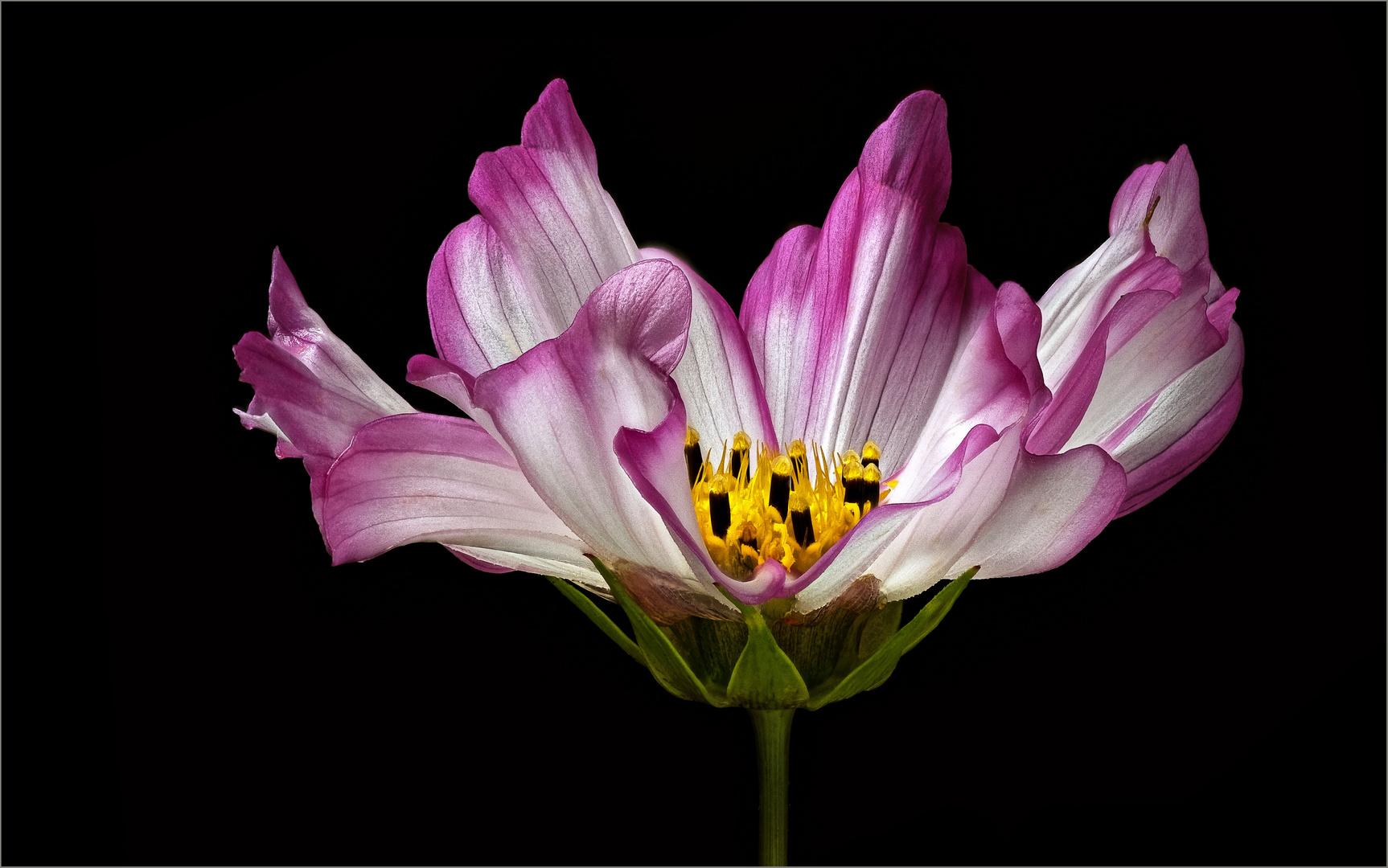 Auf einem Blühstreifen entdeckt