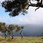 auf einem der Picos Madeiras