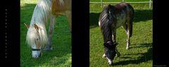 """""""Auf einem Pferdehof bei Rottach"""""""