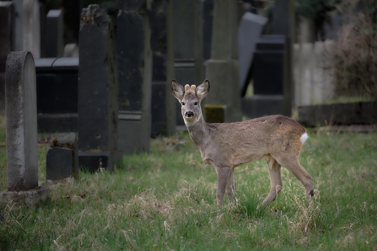 Auf Fotopirsch im Zentralfriedhof