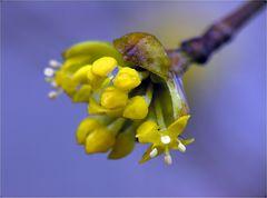 Auf Frühlings - Erkundungstour