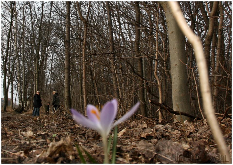 Auf Frühlingssuche
