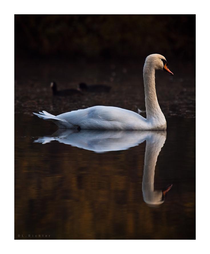 :| ... auf goldenen Wassern |: