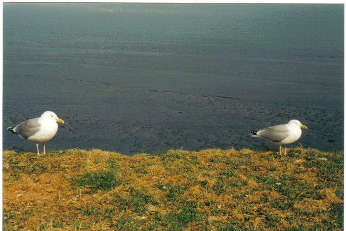 Auf Helgoland