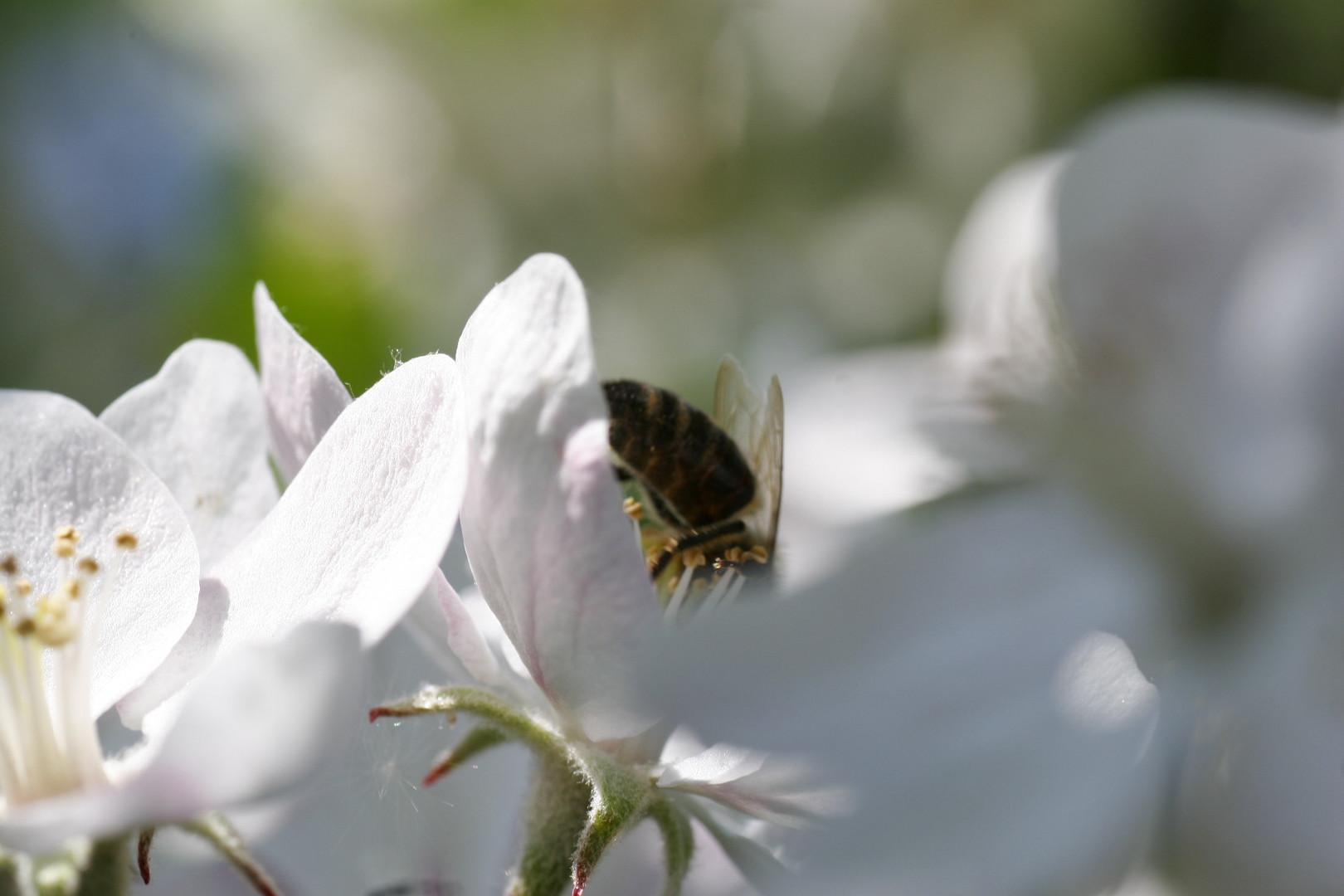 auf Honigsuche